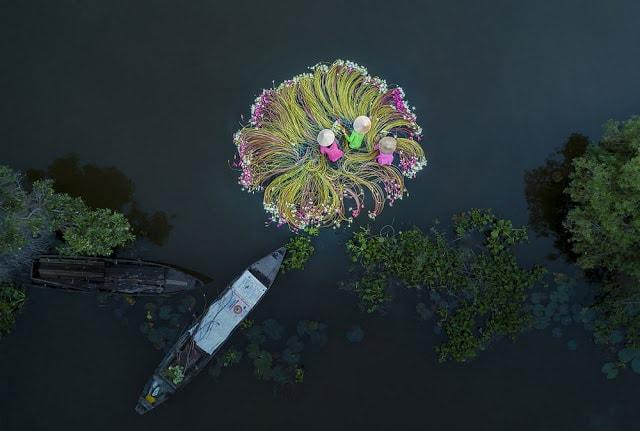 Сезон сборa лилий