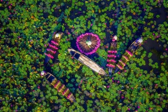 Сезон сборa лилий во Вьетнаме