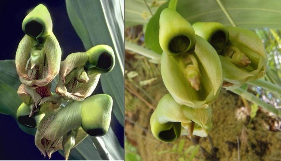 Самые странные растения